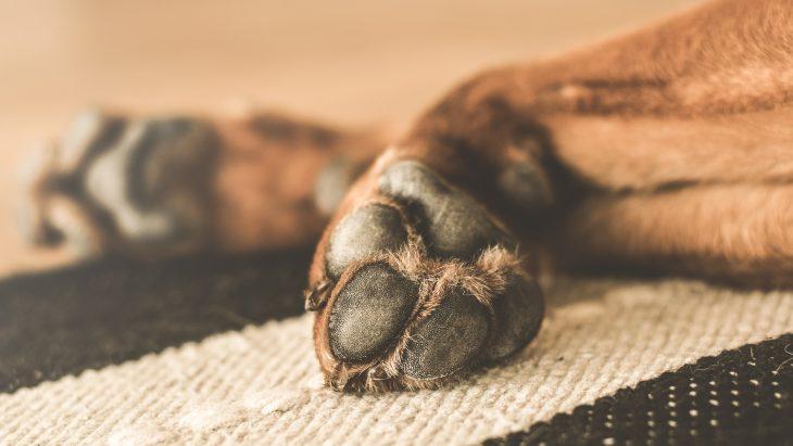 Como oferecer o máximo de bem-estar ao seu pet?