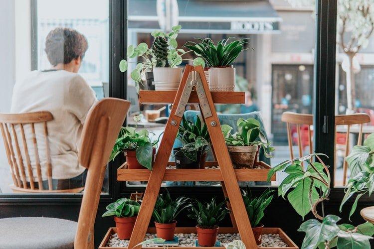 Como fazer uma horta no seu apartamento: dicas práticas!
